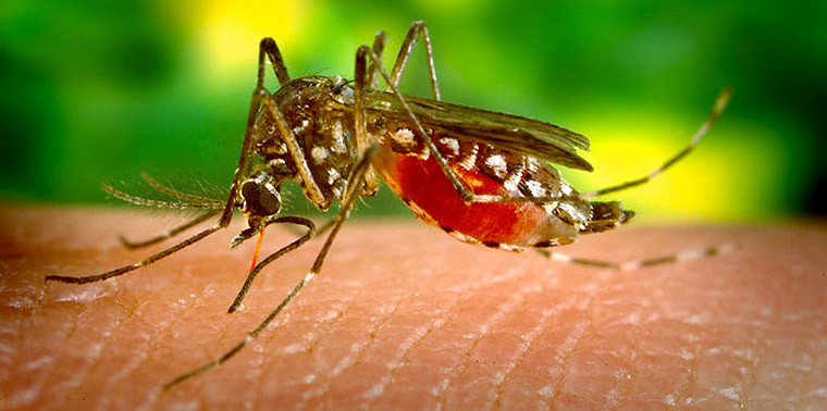 The unintended impacts of mosquito insecticides
